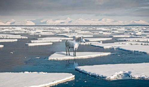 【组图】全球变暖创意公益广告图片